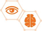 LEVEL 1: Eye/Brain