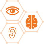 LEVEL 2: Eye/Brain/Ear