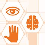LEVEL 2: Eye/Brain/Muscle
